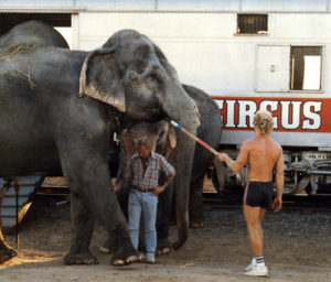 photo of elephant led with bullhook by trainer