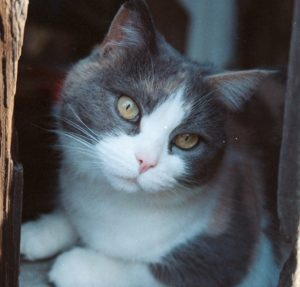 photo of Niabi, Ira's sweet calico cat, nestled in a nook in the barn at Blue Jay Way