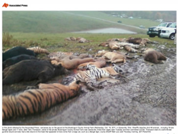 photo of big cats, lions, tigers and cougars lying dead after being massacred in Zanesville, OH