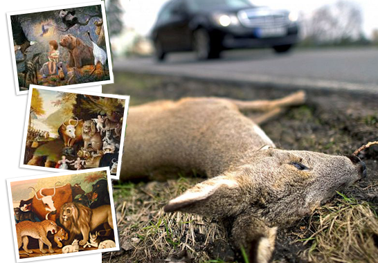 photo of dead deer alongside road